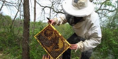 2048x1536-fit_colomiers-le-21-avril-2013-un-apiculteur-au-travail-surl-une-de-ses-ruches